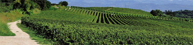 strada del vino Custoza